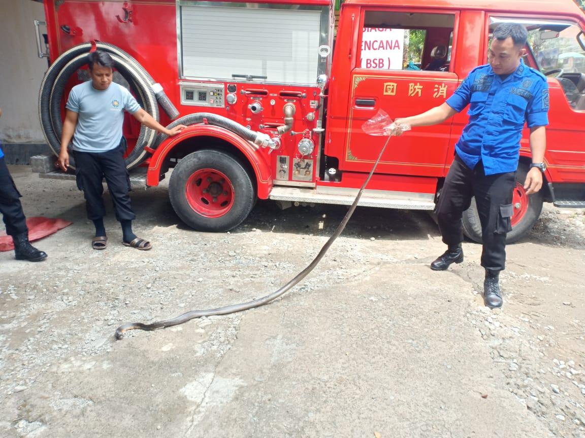 https: img.okezone.com content 2019 12 16 609 2142525 ular-kobra-dua-meter-masuk-rumah-warga-sempat-berkelahi-dengan-kucing-HY5s8hbPPW.jpg