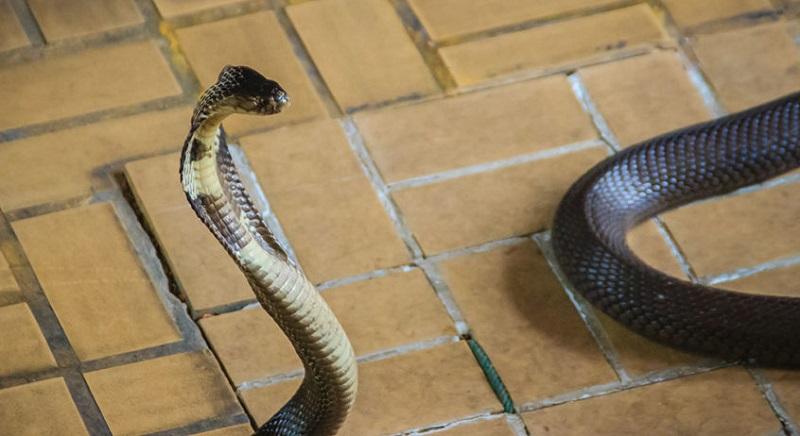 https: img.okezone.com content 2019 12 17 612 2143153 ular-masuk-ke-rumah-begini-cara-aman-menangkapnya-XNp3o4rZTA.jpg