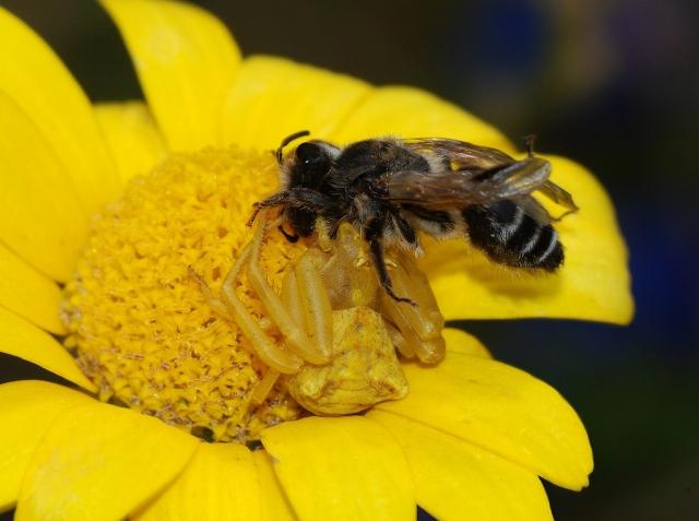 https: img.okezone.com content 2019 12 21 18 2144713 seorang-bapak-tewas-disengat-lebah-saat-menghadiri-pemakaman-putranya-9MliZKSEYo.jpg
