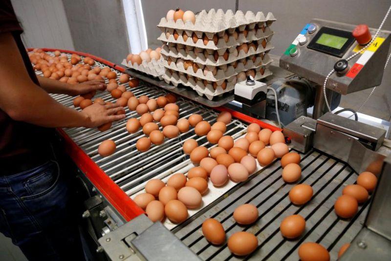 https: img.okezone.com content 2019 12 27 320 2146525 jelang-akhir-tahun-harga-ayam-hingga-daging-catatkan-kenaikan-lnQ7flaOGl.jpg