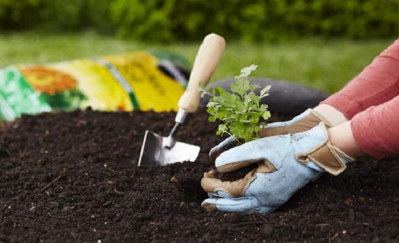 https: img.okezone.com content 2020 01 03 196 2148976 menanam-pohon-hingga-daur-ulang-sampah-plastik-untuk-cegah-banjir-A7NNZ5ktME.jpg