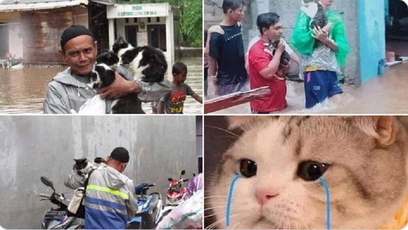 https: img.okezone.com content 2020 01 03 612 2148788 hewan-peliharaan-turut-jadi-korban-banjir-2020-kasihan-lihatnya-4kZHJ6fz3c.jpg