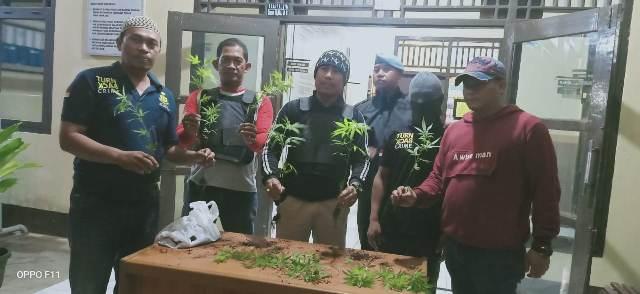 https: img.okezone.com content 2020 01 04 340 2149225 polisi-temukan-tanaman-ganja-di-kebun-kopi-pemilik-lahan-diamankan-l0MajKFGQr.jpg