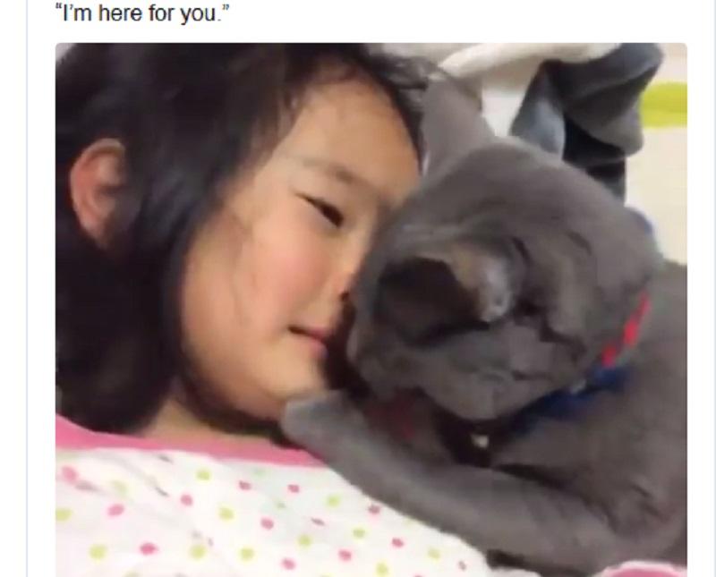 https: img.okezone.com content 2020 01 06 196 2149814 menenangkan-majikannya-yang-lagi-nangis-tingkah-kucing-ini-viral-di-medsos-9MmqvqDMo2.jpg