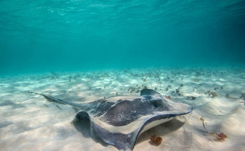 https: img.okezone.com content 2020 01 08 614 2150743 sains-dalam-alquran-arus-gelombang-dalam-di-dasar-lautan-pGrnScngI8.jpg