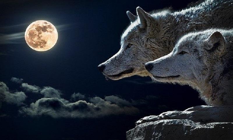 https: img.okezone.com content 2020 01 09 612 2150904 sambut-full-wolf-moon-masyarakat-diimbau-hati-hati-terhadap-bencana-5GQurVdYwS.jpg