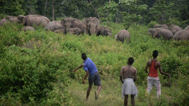 https: img.okezone.com content 2020 01 13 18 2152108 rekor-terbanyak-361-gajah-mati-di-sri-lanka-selama-2019-k8Ih3tAadD.jpg
