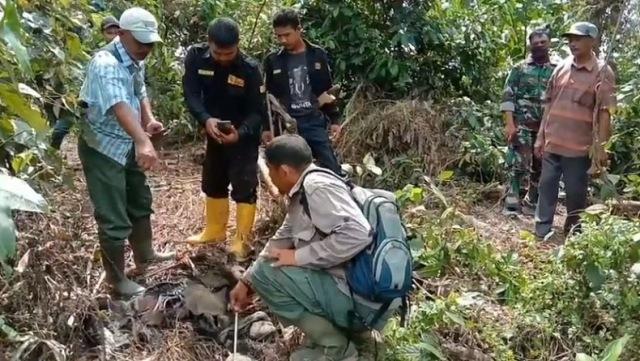 https: img.okezone.com content 2020 01 13 340 2152281 bangkai-bayi-gajah-ditemukan-tinggal-tulang-belulang-di-aceh-utara-CWlO1nmDW8.jpg