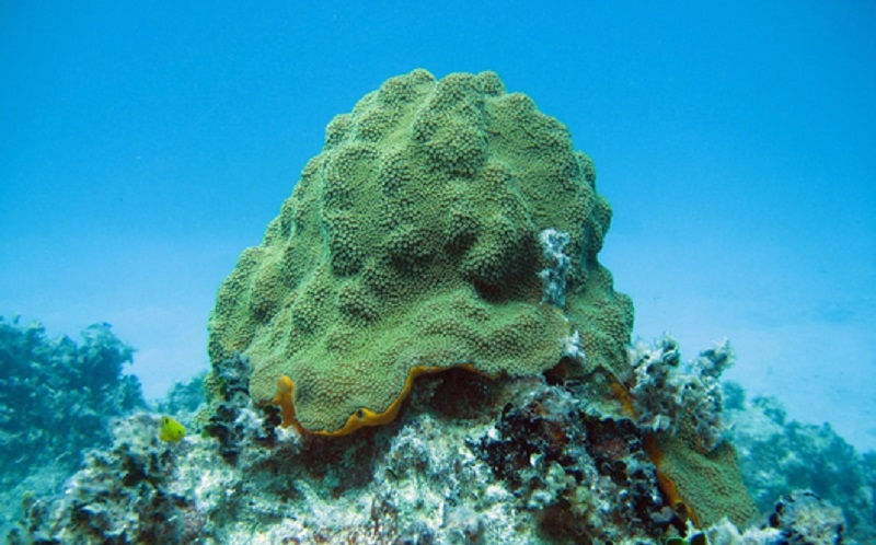 https: img.okezone.com content 2020 01 13 614 2152437 sains-dalam-alquran-mengenal-biota-laut-a6u3roY22z.jpg