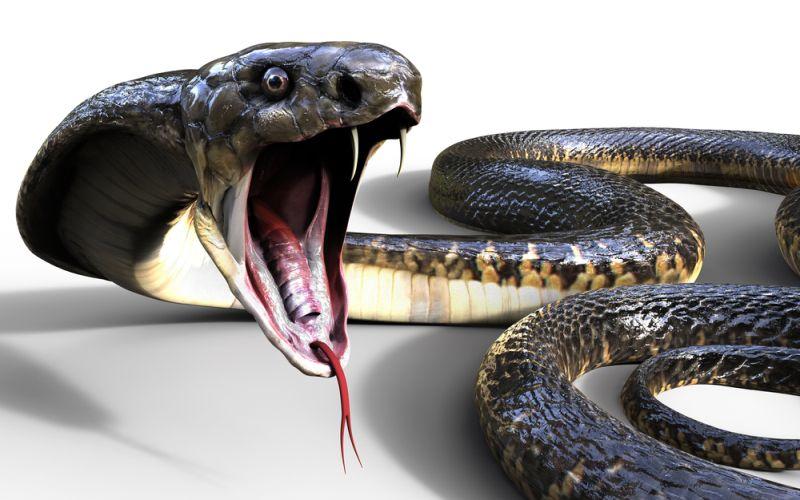 https: img.okezone.com content 2020 01 14 612 2152697 mabuk-pria-ini-ajak-ngobrol-ular-kobra-a6xiHclTaJ.jpg