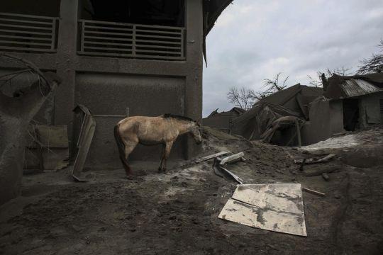 https: img.okezone.com content 2020 01 16 18 2153703 gunung-taal-erupsi-warga-pertaruhkan-nyawa-demi-selamatkan-kudanya-BkwTTDOiRu.jpg