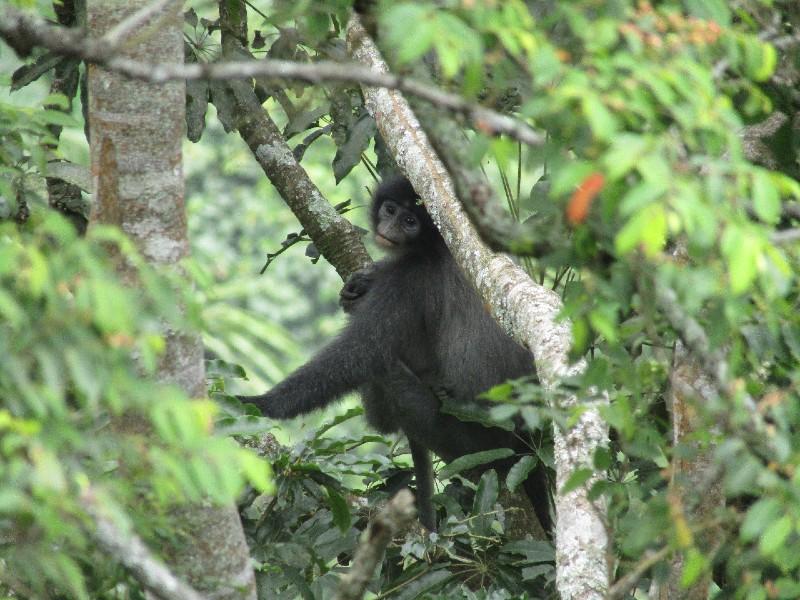 https: img.okezone.com content 2020 01 17 56 2154162 monyet-surili-hewan-khas-di-taman-nasional-gunung-ciremai-iAubsYAEYn.jpg