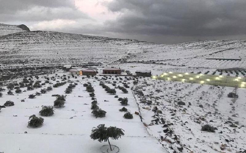 https: img.okezone.com content 2020 01 17 615 2154254 tak-hanya-arab-saudi-warga-uea-kini-nikmati-hujan-salju-di-negaranya-mlznNT0X6x.jpg