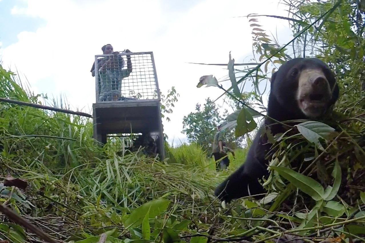 https: img.okezone.com content 2020 01 20 340 2155469 kisah-perjuangan-nanjung-beruang-bertangan-satu-kembali-ke-alam-liar-beB6pkBgbk.jpg