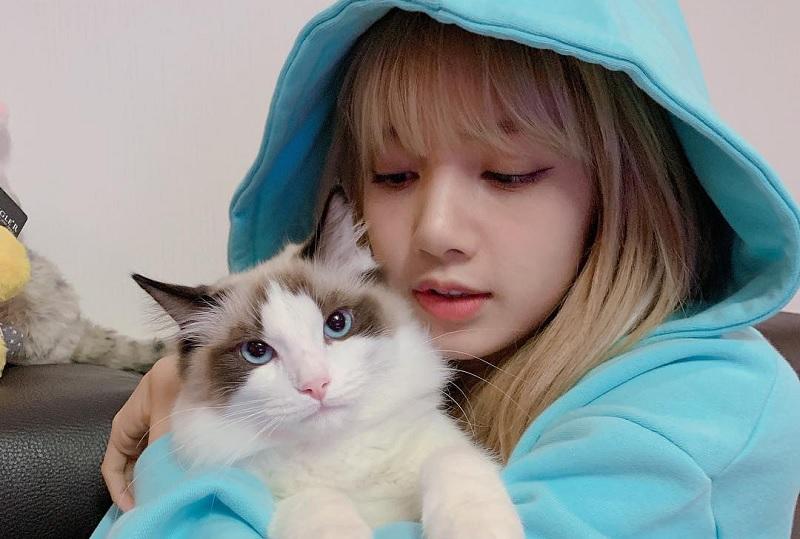 https: img.okezone.com content 2020 01 21 33 2156175 cara-ampuh-lisa-blackpink-hilangkan-stres-peluk-kucing-Wp6TFJssQ4.jpg