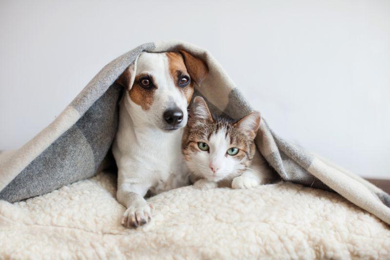 https: img.okezone.com content 2020 01 23 612 2156996 seberapa-penting-vaksin-untuk-anjing-dan-kucing-E0rkRwfk6r.jpg