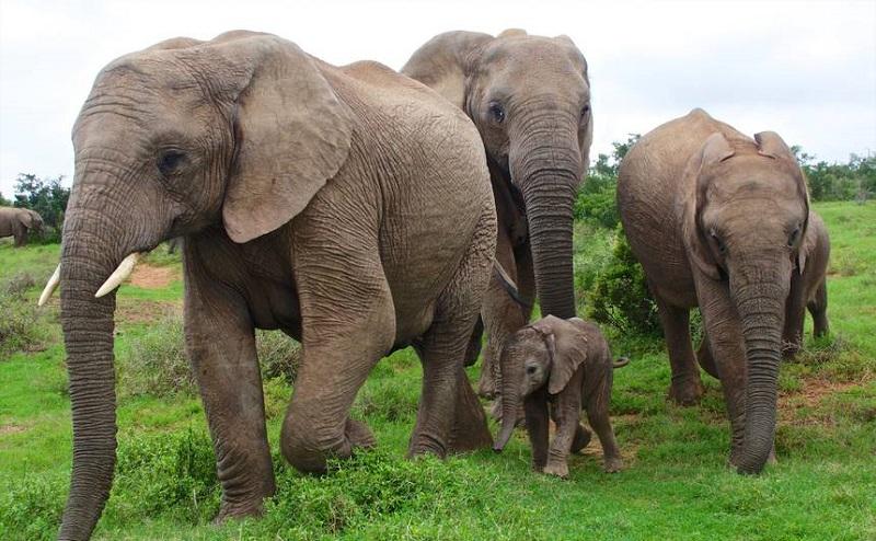 https: img.okezone.com content 2020 02 05 614 2163786 sains-dalam-alquran-hewan-hidup-berkelompok-seperti-umat-manusia-vkOpaH4S6y.jpg