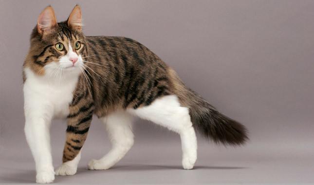https: img.okezone.com content 2020 02 13 330 2167805 catat-ini-hukum-jual-beli-kucing-dalam-islam-2PbYfDvUxv.jpg