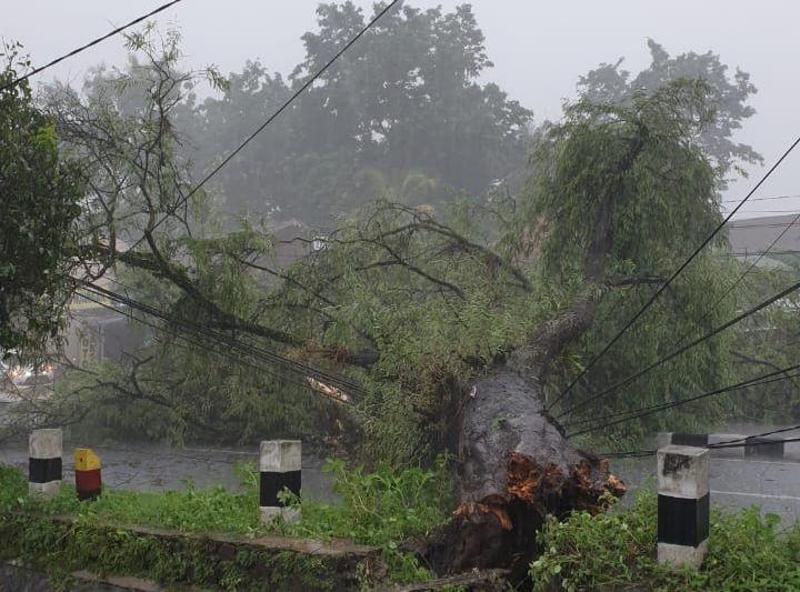 https: img.okezone.com content 2020 02 14 510 2168636 hujan-deras-guyur-yogyakarta-puluhan-pohon-tumbang-zgfBwV3YZg.jpg