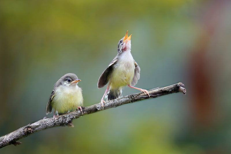 https: img.okezone.com content 2020 02 14 612 2168762 indonesia-punya-21-spesies-burung-baru-loh-it7Th1zNqR.jpg