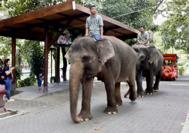 https: img.okezone.com content 2020 02 19 510 2170863 dua-gajah-di-kebun-binatang-yogyakarta-bersiap-melahirkan-yKHWbzf61X.jpeg