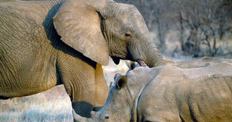 https: img.okezone.com content 2020 02 20 56 2171732 terancam-punah-gajah-dan-badak-miliki-peran-penting-untuk-ekosistem-bumi-9y0FHG799d.jpg