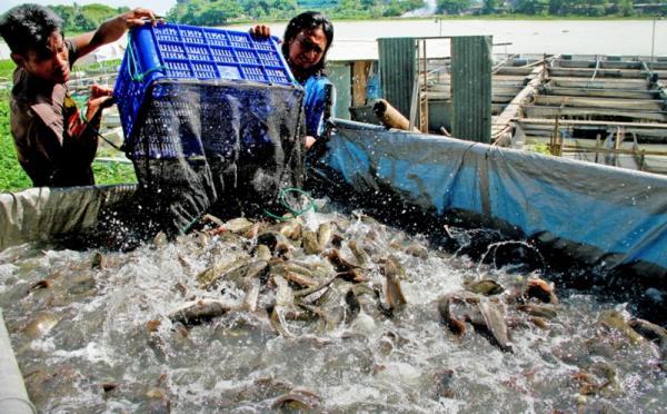 Ternak Ikan Lele Bisa Gagal Ini Penyebabnya Okezone Economy