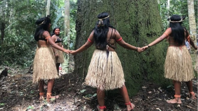 https: img.okezone.com content 2020 02 24 18 2173464 remaja-suku-amazon-rela-bertarung-sampai-mati-selamatkan-hutan-amazon-Q0oM0Tu6ai.jpg