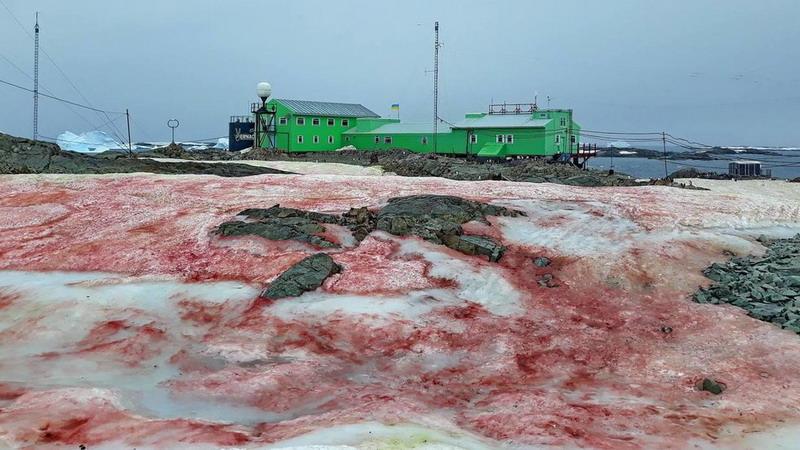 https: img.okezone.com content 2020 02 26 18 2174341 salju-merah-darah-selimuti-stasiun-kutub-ukraina-di-antartika-9iUbKquwrP.jpg