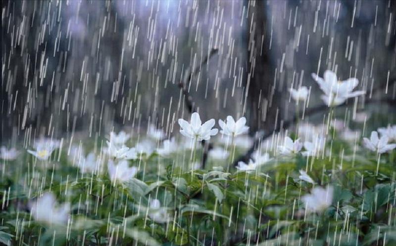 https: img.okezone.com content 2020 02 26 481 2174347 musim-hujan-usir-flu-dengan-ramuan-alami-jahe-ini-t0BG61aDfx.jpg