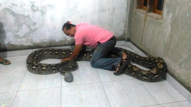 https: img.okezone.com content 2020 02 26 609 2174286 warga-temukan-ular-sanca-sepanjang-11-meter-saat-buang-sampah-QwaEO4Jiva.jpg