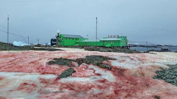 https: img.okezone.com content 2020 03 03 56 2177233 ini-penyebab-munculnya-salju-merah-di-antartika-4NVsJEonGa.jpg