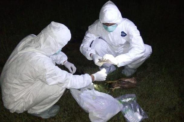 https: img.okezone.com content 2020 03 04 338 2178265 hewan-yang-mati-mendadak-di-cibarusah-diuji-laboratorium-d3U1zMIJuX.jpg