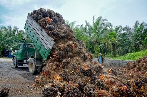 https: img.okezone.com content 2020 03 12 320 2182245 presiden-jokowi-ingin-sektor-pertanian-tidak-hanya-tanam-sawit-hingga-karet-l6GGjQeJPQ.jpg