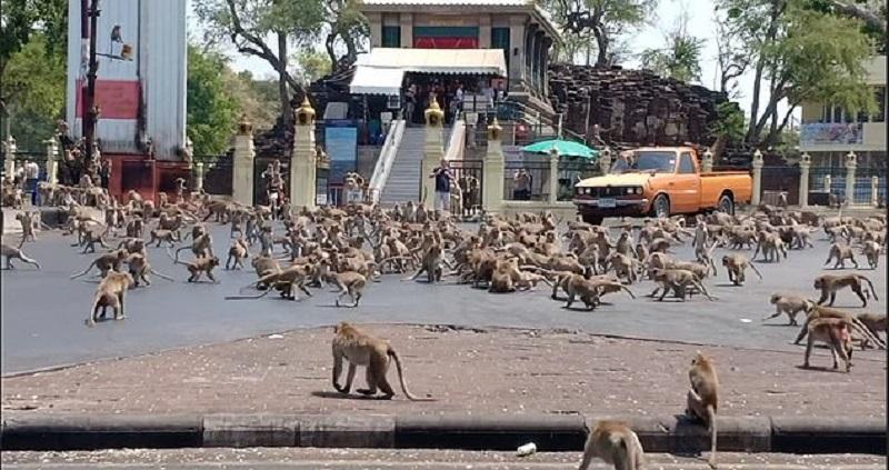https: img.okezone.com content 2020 03 13 612 2182749 gara-gara-covid-19-ratusan-monyet-di-thailand-kelaparan-Dl8L8aWZK1.jpg