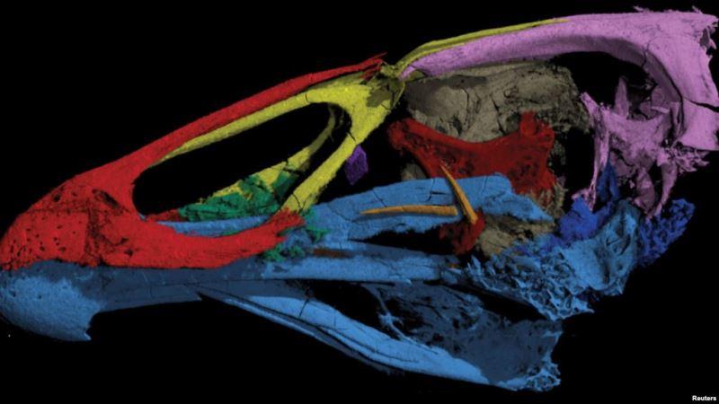 https: img.okezone.com content 2020 03 19 56 2186074 ilmuwan-meneliti-fosil-wonder-chicken-berusia-66-juta-tahun-zNiwkeDMFj.jpg
