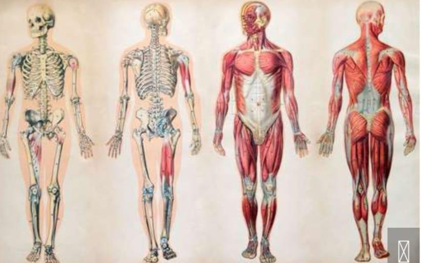 https: img.okezone.com content 2020 03 28 56 2190407 4-fakta-sains-tentang-tubuh-manusia-Xk9zisMXbe.jpeg