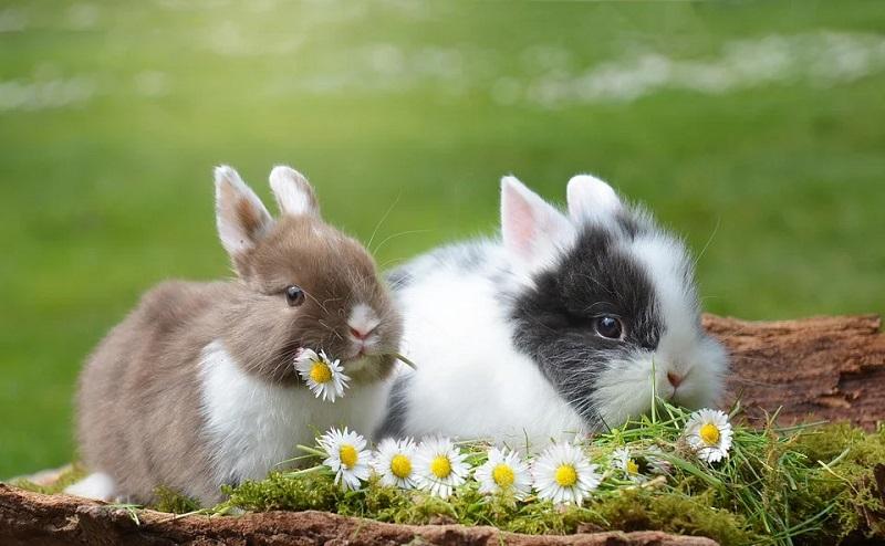 https: img.okezone.com content 2020 04 12 196 2197868 pelihara-kelinci-cara-baru-rayakan-paskah-saat-pandemi-corona-XrIuI1QDJ7.jpg