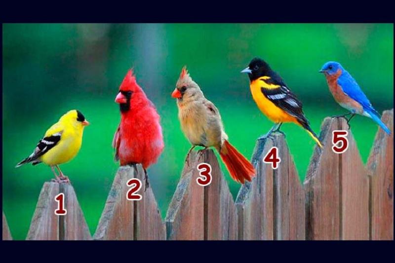 https: img.okezone.com content 2020 04 16 612 2199907 pilih-1-dari-5-burung-ini-ungkap-karakter-dan-kepribadian-anda-e535UuUvR1.jpg