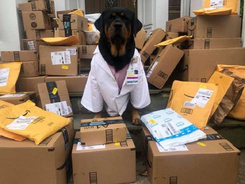 https: img.okezone.com content 2020 04 20 612 2202210 viral-dogtor-anjing-pengantar-paket-kesehatan-untuk-bantu-tenaga-medis-y2e0g5tiZw.jpg