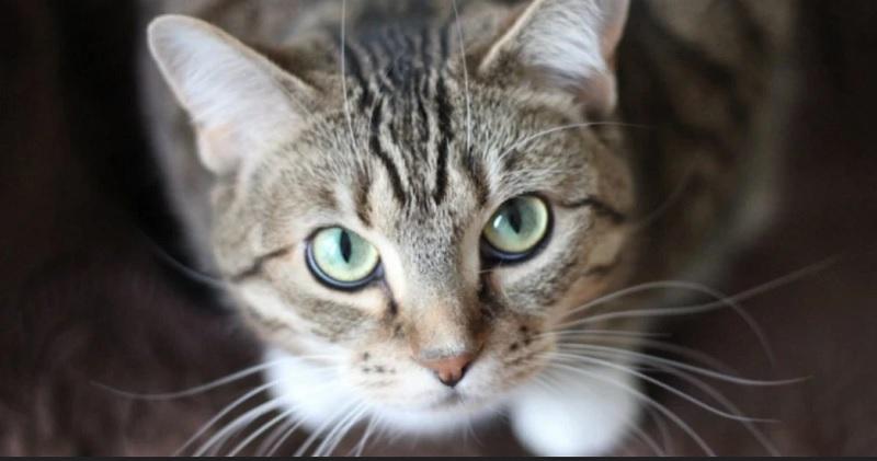 https: img.okezone.com content 2020 04 30 612 2207447 politisi-lempar-kucing-saat-rapat-virtual-jabatannya-terancam-dicopot-SdTL1XhEf0.jpg