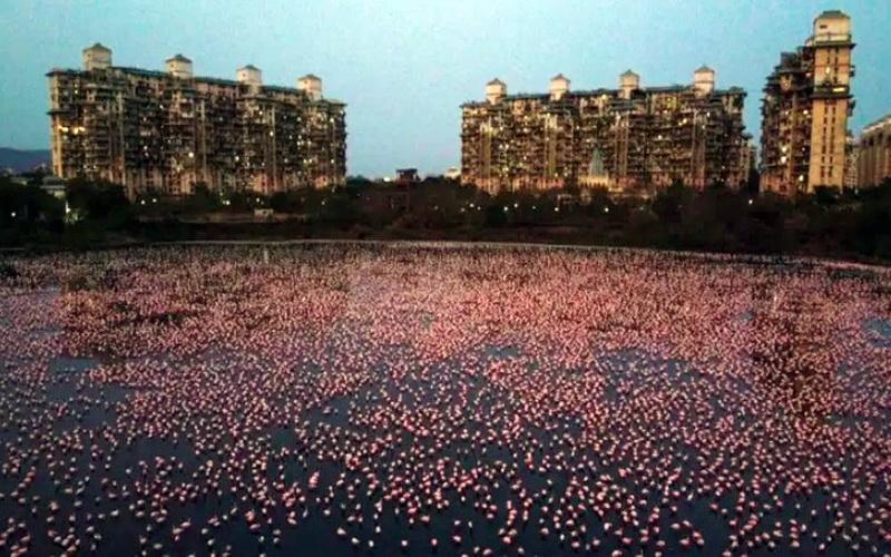 https: img.okezone.com content 2020 05 03 406 2208323 lockdown-ratusan-ribu-flamingo-ubah-wajah-kota-ini-jadi-pink-6KDtOqGozZ.jpg