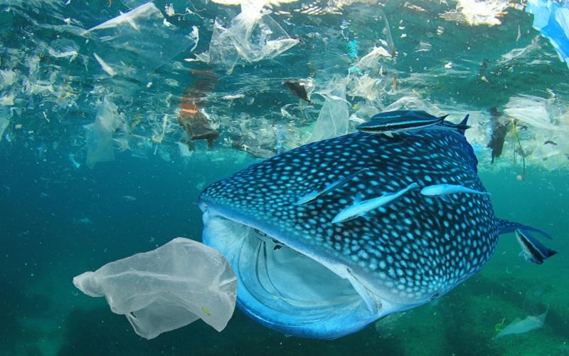https: img.okezone.com content 2020 05 10 612 2211774 bukan-plastik-ini-kantong-belanja-ramah-lingkungan-dari-ubi-dan-singkong-TexXYzTIYc.jpg