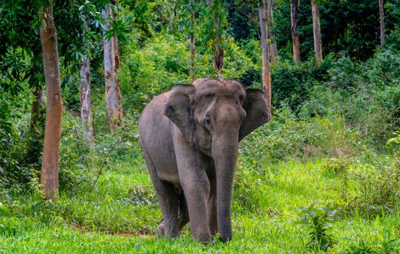 https: img.okezone.com content 2020 05 12 610 2213053 gajah-liar-ngamuk-warga-musi-rawas-utara-tewas-terinjak-ozOMEYTdf0.jpg