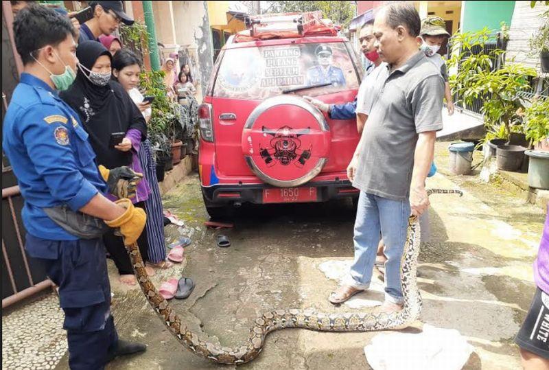 https: img.okezone.com content 2020 05 13 338 2213607 ular-sanca-sepanjang-5-meter-dievakuasi-dari-tembok-rumah-warga-IfwxVglm2O.jpg
