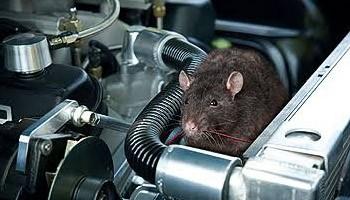 https: img.okezone.com content 2020 05 13 52 2213269 waspada-serangan-tikus-saat-mobil-lama-berada-di-rumah-c7HXeAU5IZ.jpg
