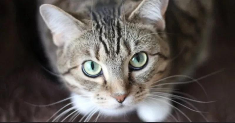 https: img.okezone.com content 2020 05 14 56 2214006 studi-ungkap-sesama-kucing-bisa-tularkan-virus-corona-WvTdeIEAT6.jpg