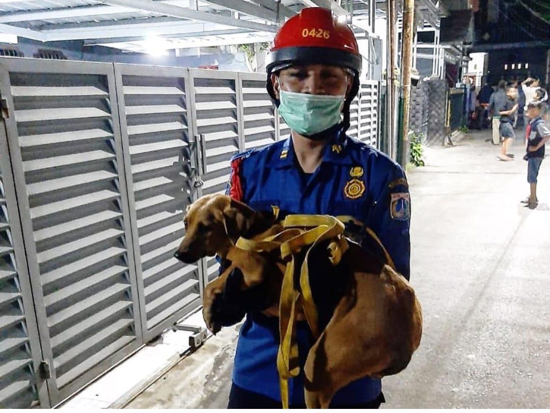 https: img.okezone.com content 2020 05 24 338 2218807 tim-damkar-selamatkan-anjing-yang-ketakutan-digangguin-bocah-di-jaktim-chrxYu6xtM.jpg