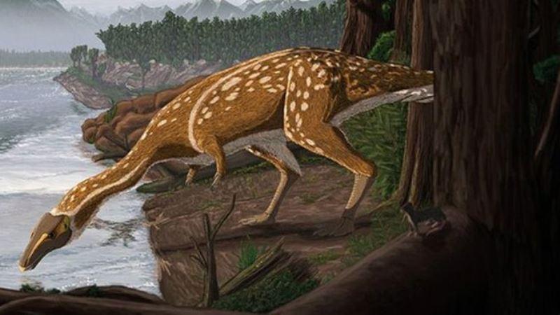 https: img.okezone.com content 2020 05 25 620 2219315 dinosaurus-ompong-berusia-110-juta-tahun-ditemukan-di-australia-d9R4vflIsQ.jpg