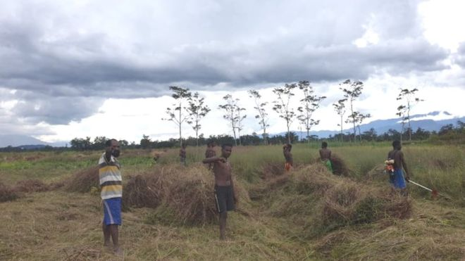 https: img.okezone.com content 2020 05 26 340 2219485 2-juta-warga-terancam-kelaparan-masyarakat-papua-berkebun-massal-qQsMJQ8D29.jpg